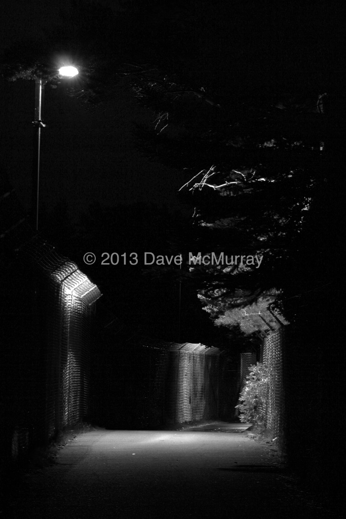 Henderson Lake Pathway at Night #2