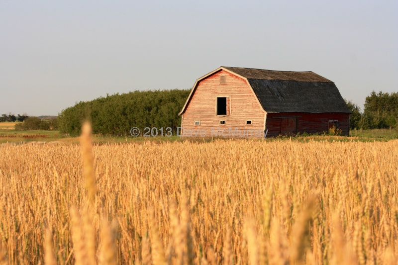 Old Barn at Sunset - Leslie, SK
